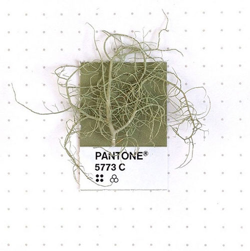 Pantone chip plant