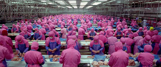 Chicken processing, Samsara