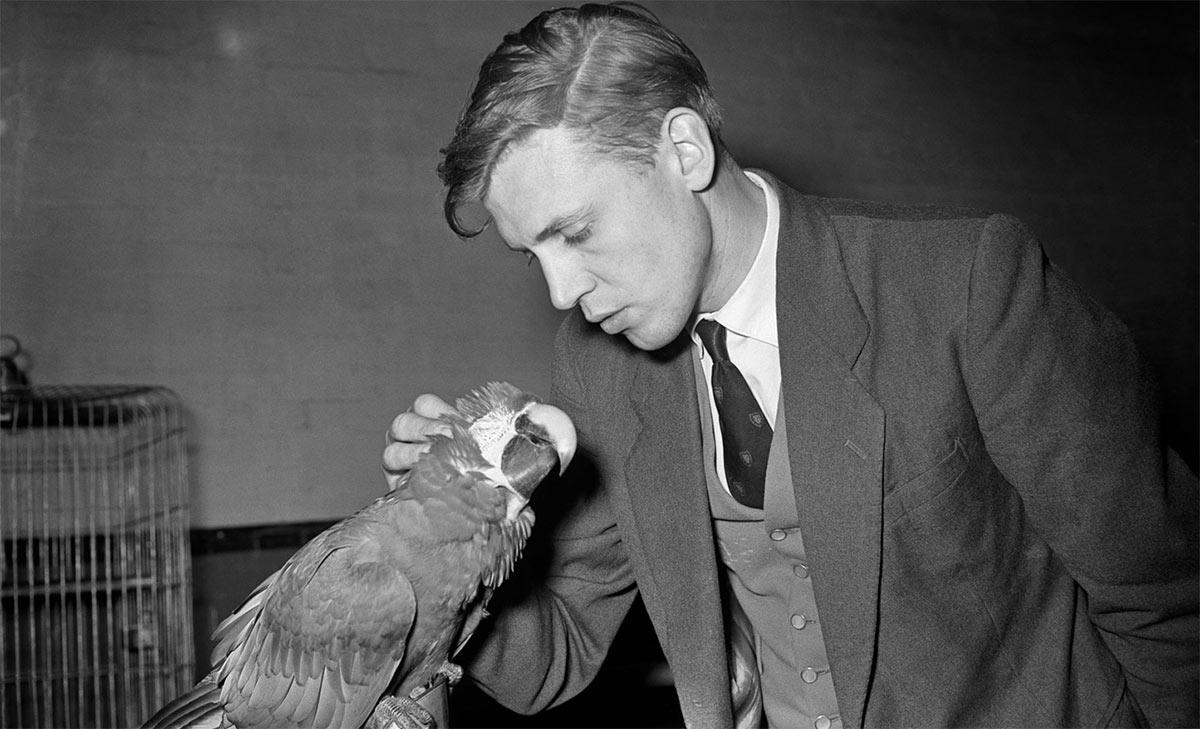 David Attenborough, c1950-51
