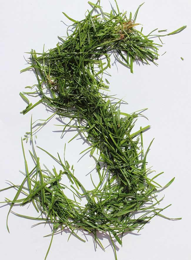 S grass