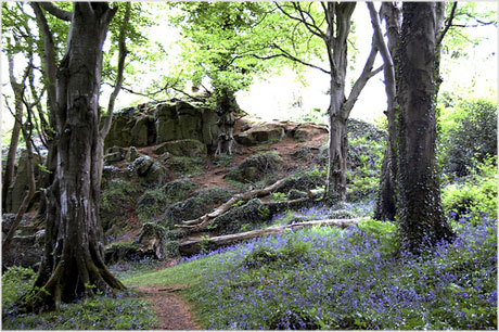 Killynether Wood Northern Ireland
