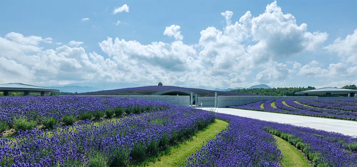 Tadao Ando's Hill of Buddha